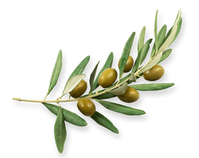 kisspng-olive-oil-portable-network-graphics-olive-branch-s-anasayfa-web-site-temasi-5c00fdd4068846.8365505115435688520268